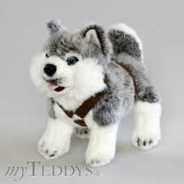 Plüschtier Hund Husky